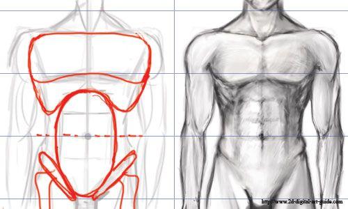 The Digital Art 101 Sitemap Lrn Pinterest Male Torso Anatomy
