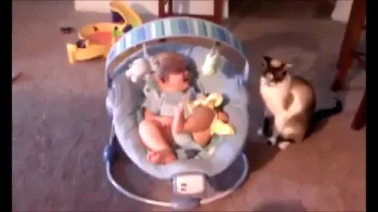 funny cats videos part 01