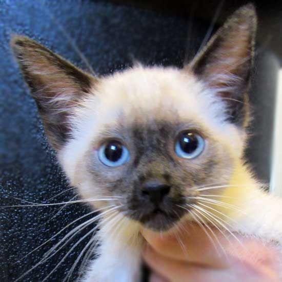 Cat & Kittens for Adoption in San Diego | Helen Woodward Animal Center