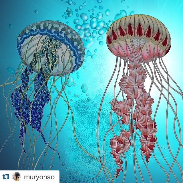 Image Result For Adult Colouring Pages Animals Coloured In Jellyfish