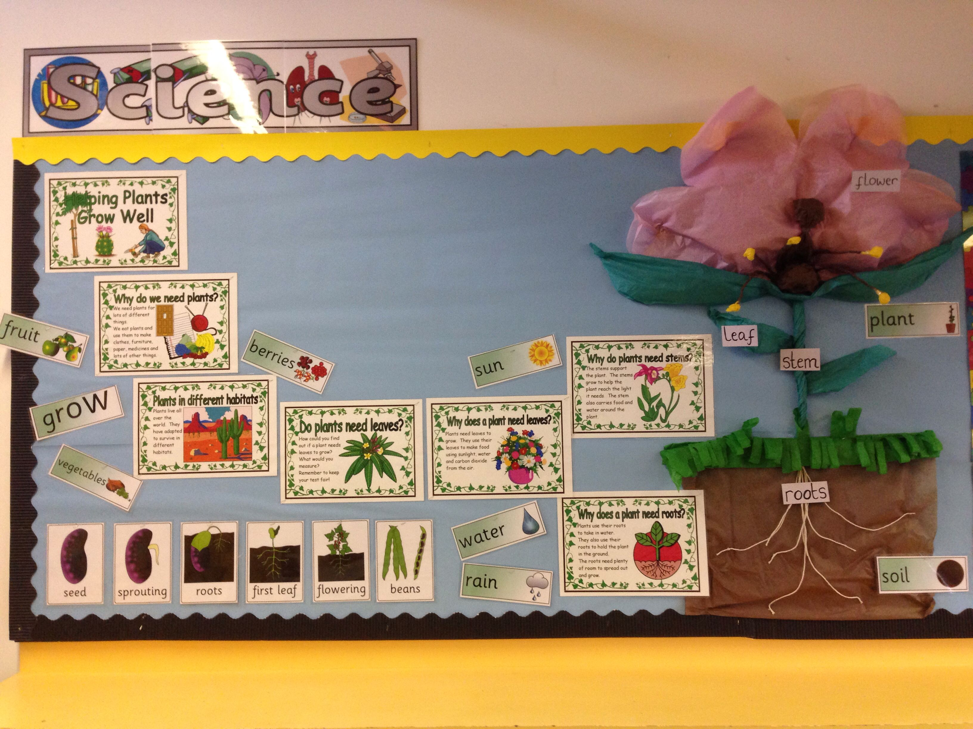 my plant display board beginning of a topic year 3 plants classroom displays social. Black Bedroom Furniture Sets. Home Design Ideas