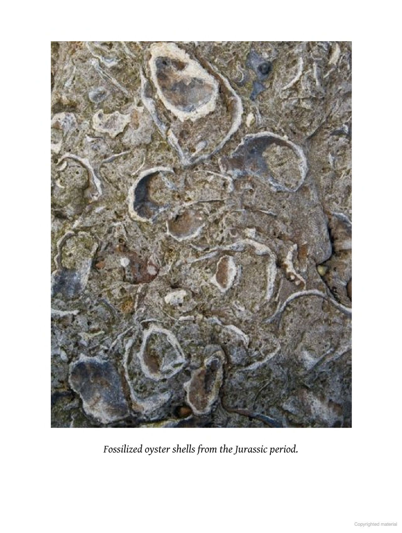 oyster a gastronomic history with recipes
