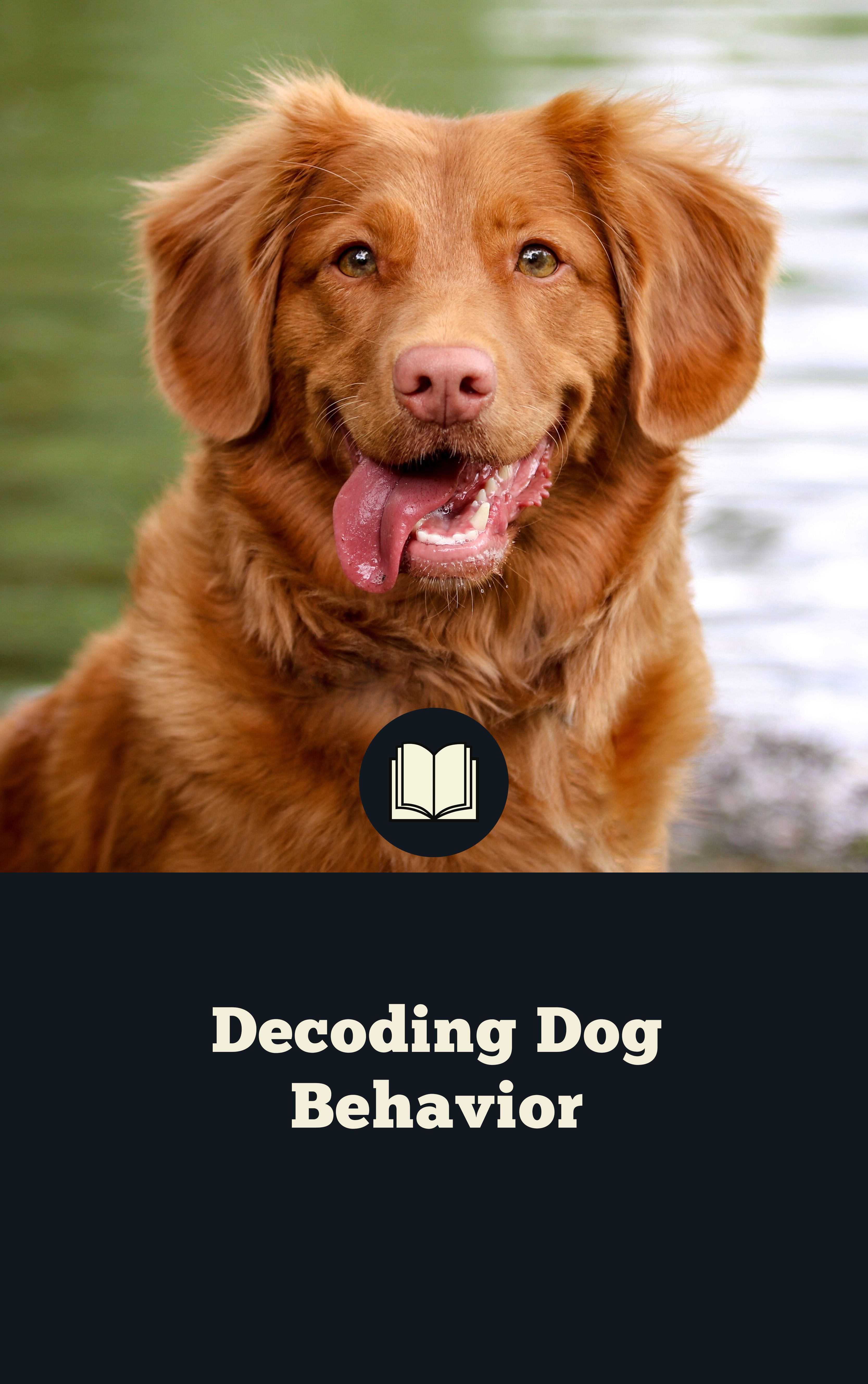 How To Decode Dog Behavior With Images Dog Communication Dog