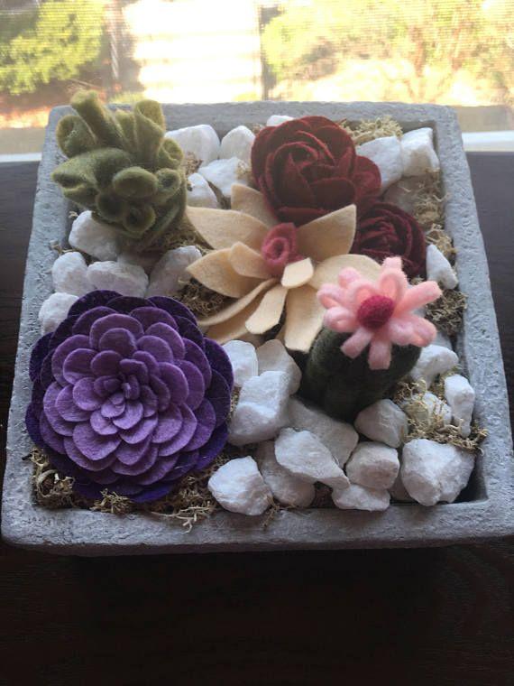 jardín de fieltro plato suculento