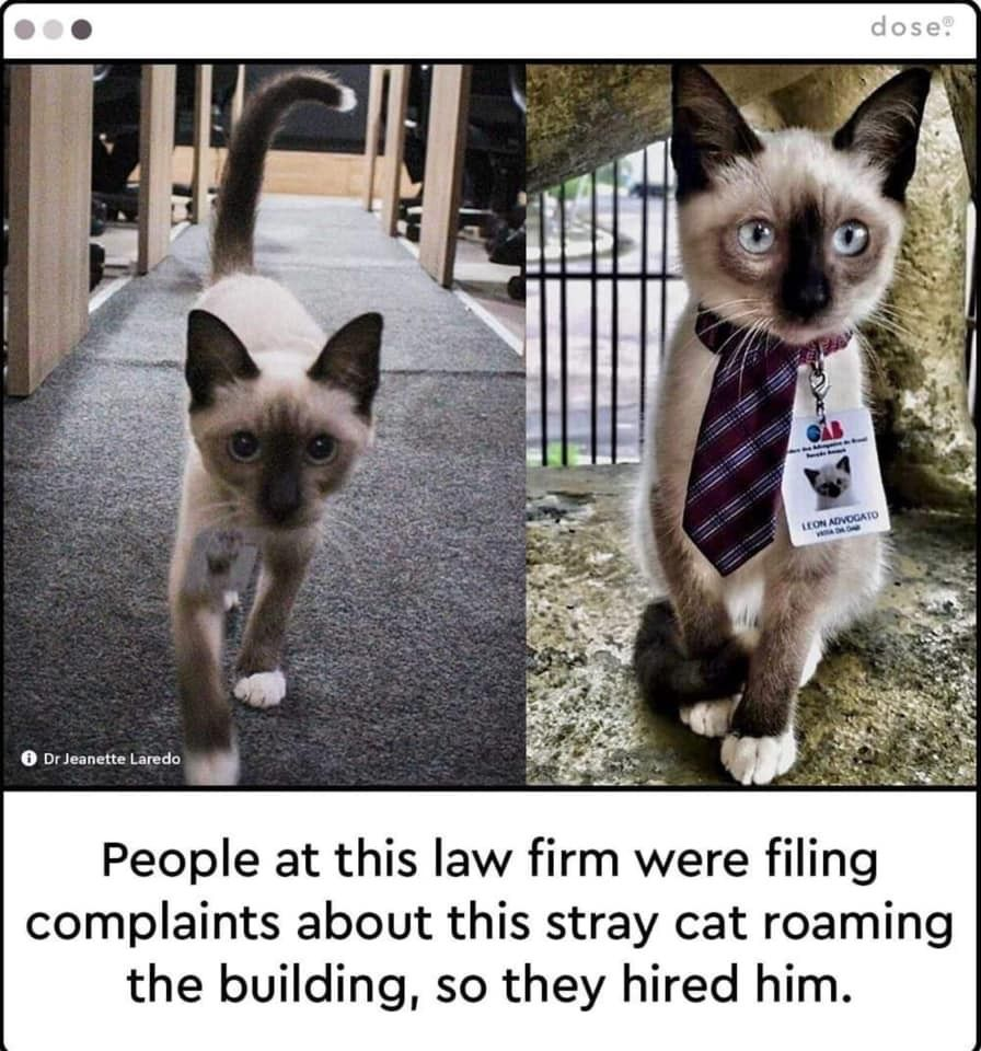 Pin By Cat Furnature Co Uk On Cat Comedy Funny Animals Cute Funny Animals Cute Animals