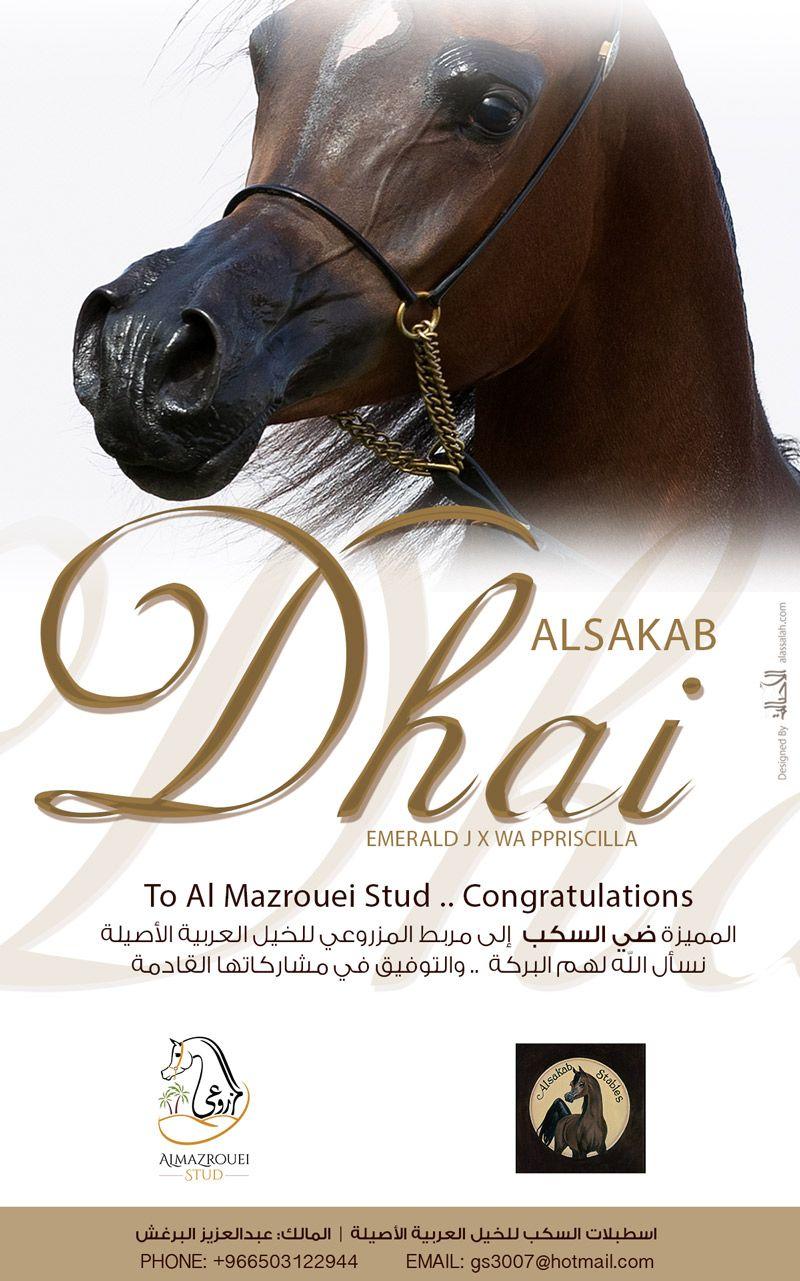 ضي السكب إلى مربط المزروعي Arabian Horse Horses Arabians