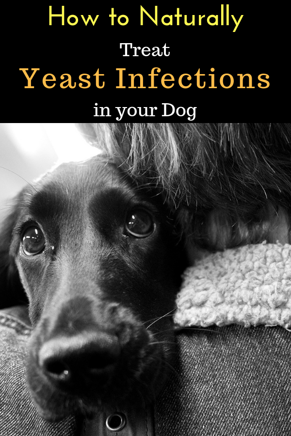 8fdcb58fc28b0089bdd0b7e762c3e204 - How To Get Rid Of Yeast In My Dog