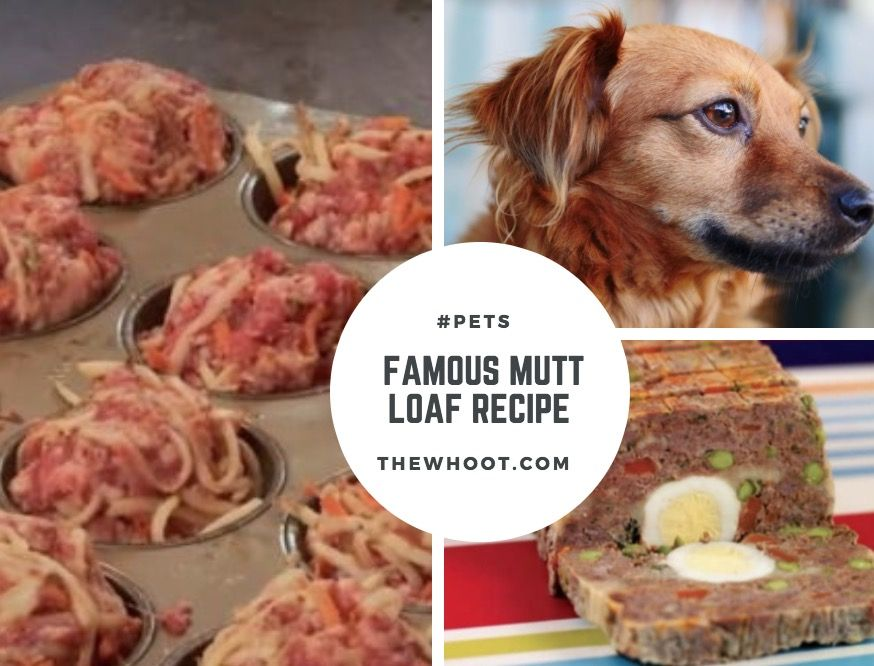 Mutt Loaf Recipe For Dogs Watch The Video Tutorial Dog Food