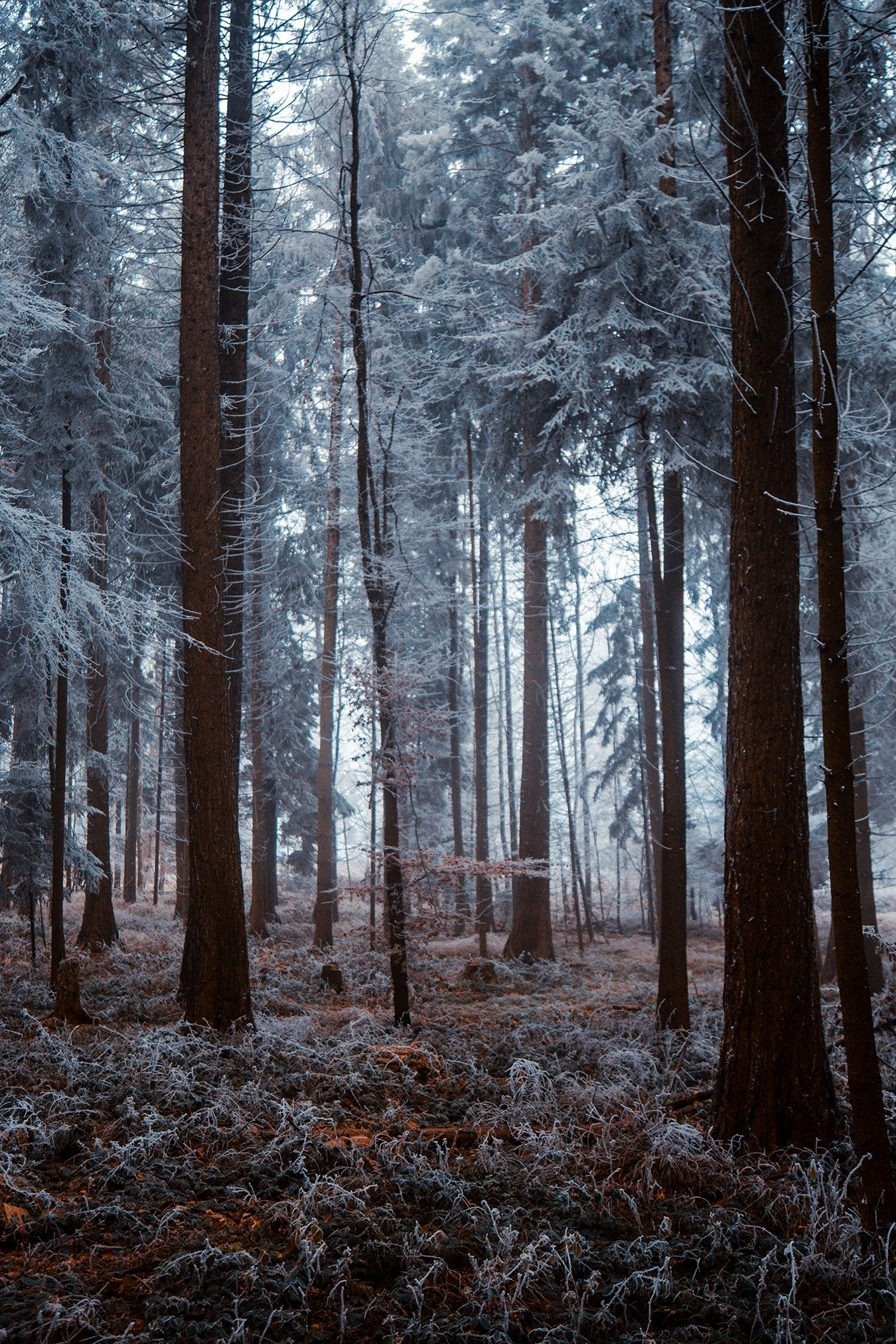 настоящие картинки с лесом