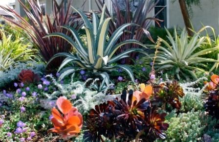 17 Best 1000 images about Drought tolerant landscaping on Pinterest