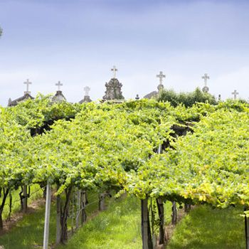 I love the green trellises of Albariño vineyards