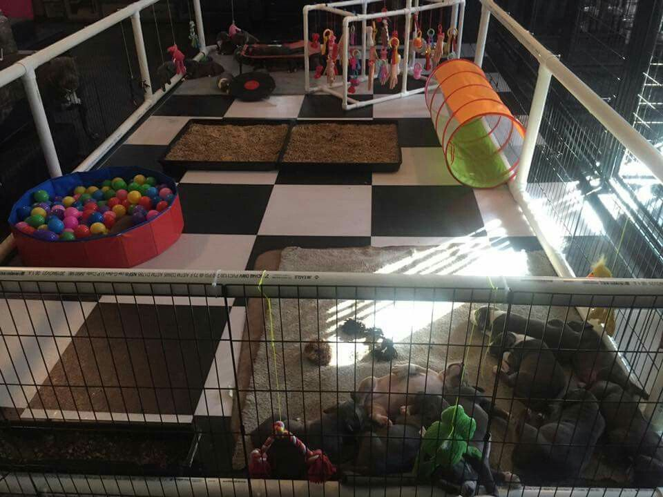 Puppy Play Pen Puppy Playpen Dog Playpen Dog Play Room