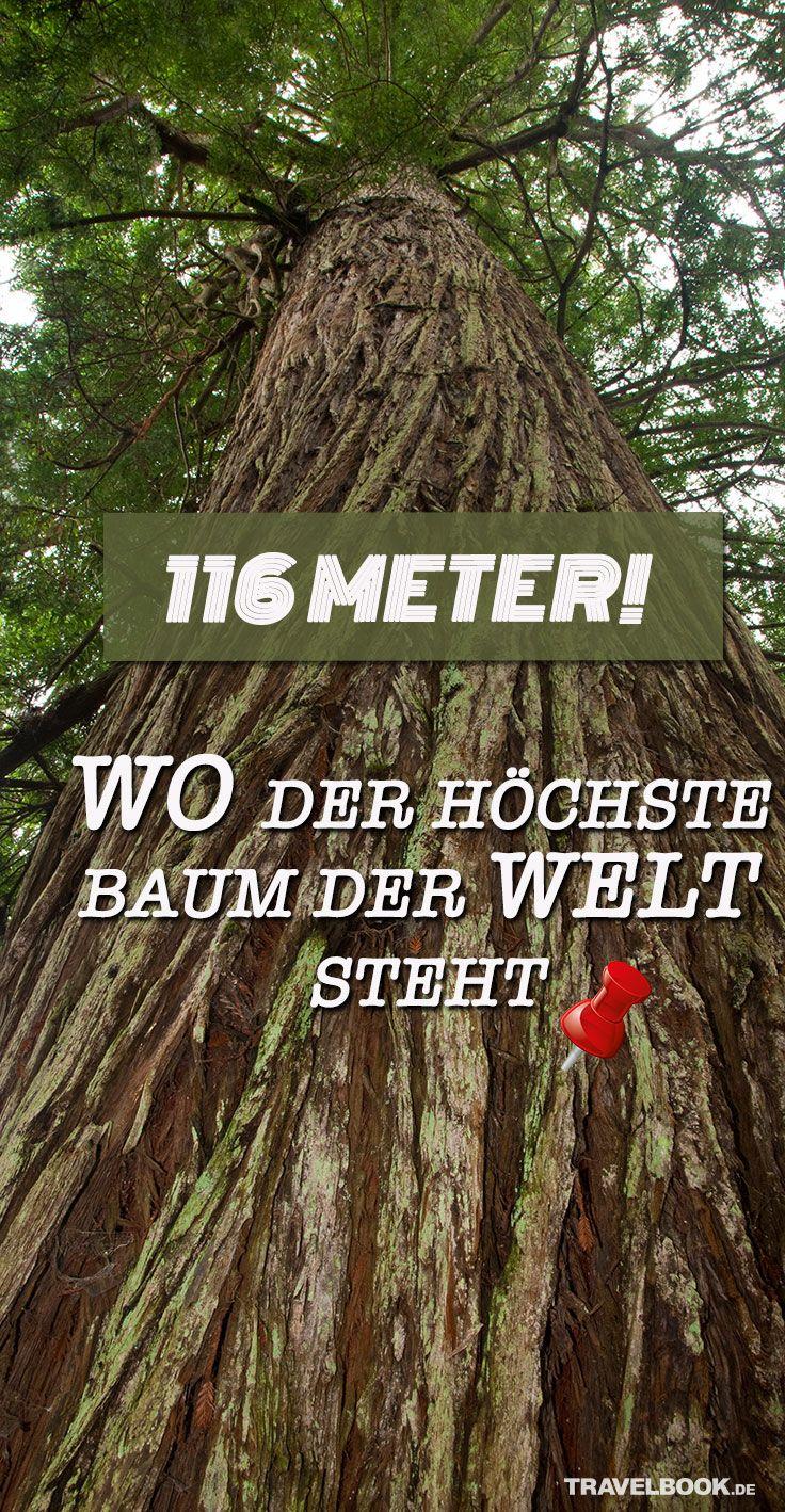 Das Ist Der Hochste Baum Der Welt Und Sein Standort Ist Geheim Reisemagazin Nationalpark Reisen