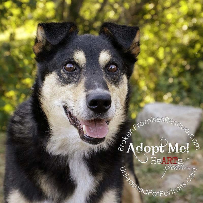 Adopt Rocky on Husky dogs, Dogs, Adoption