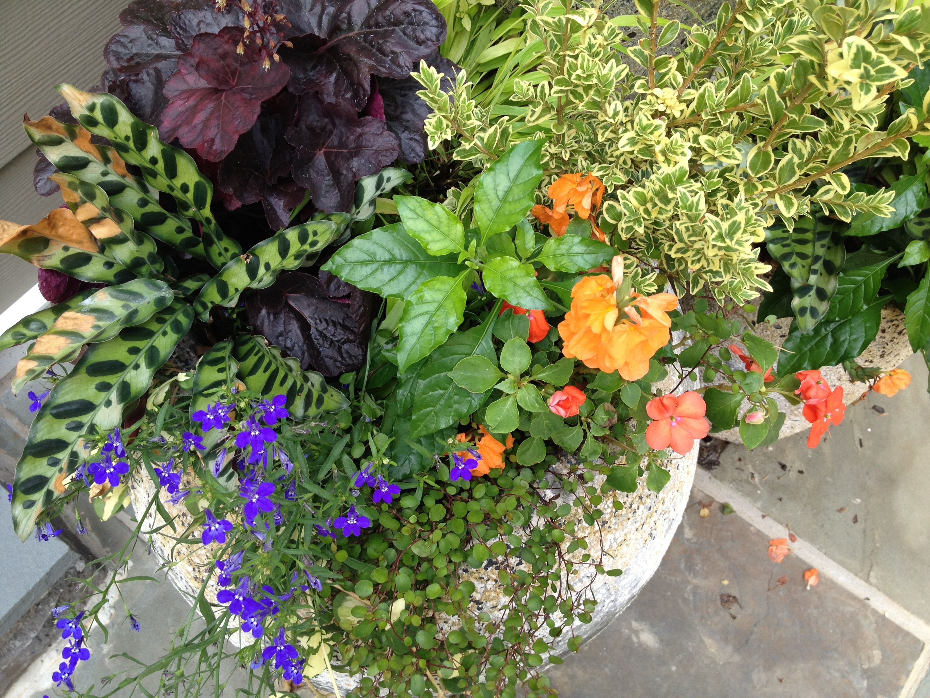 When can annuals be planted-3081
