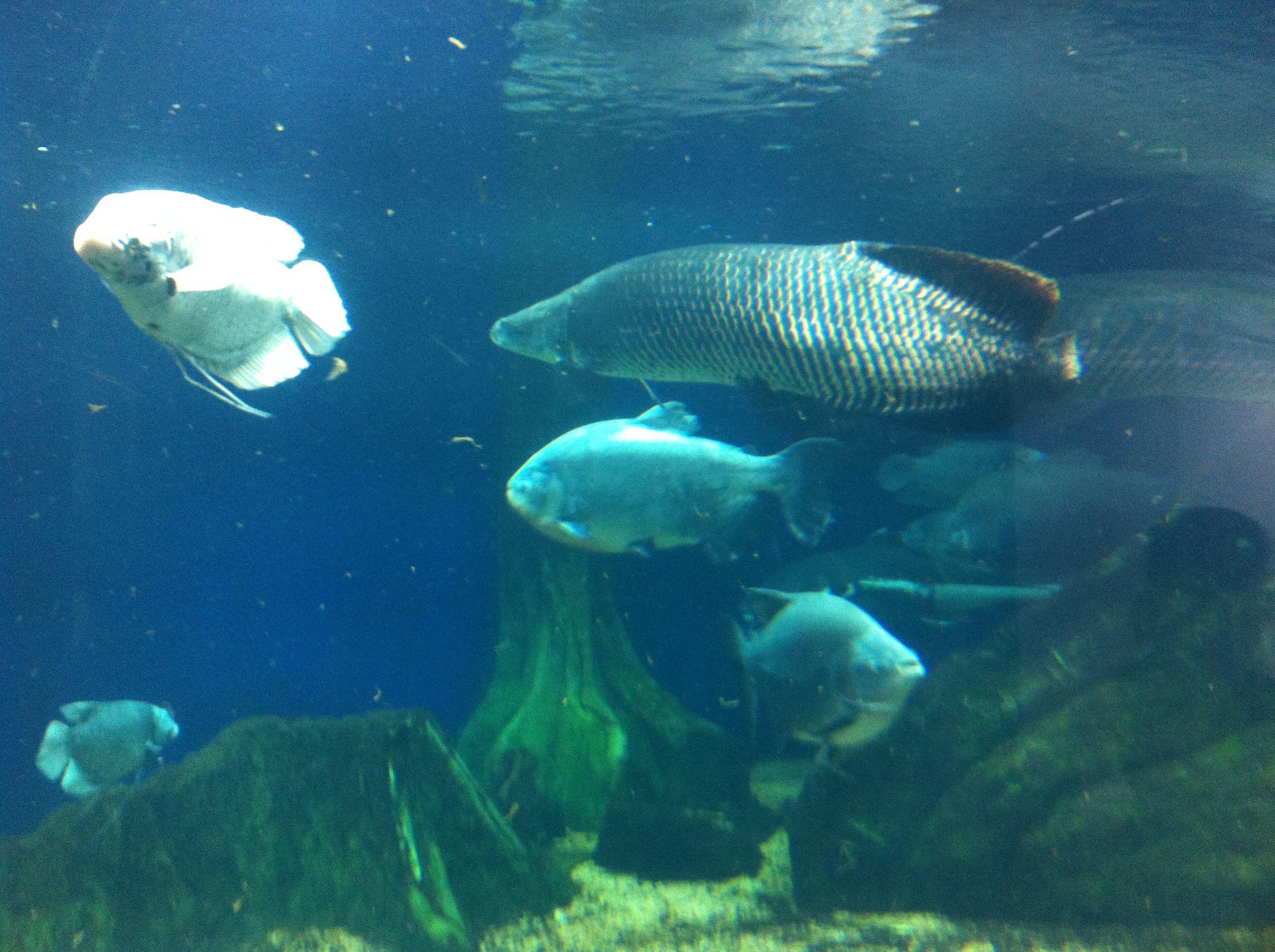 8fe0a2aa54d976276e72d9b2bd9eb47e Frais De Aquarium Osaka Concept