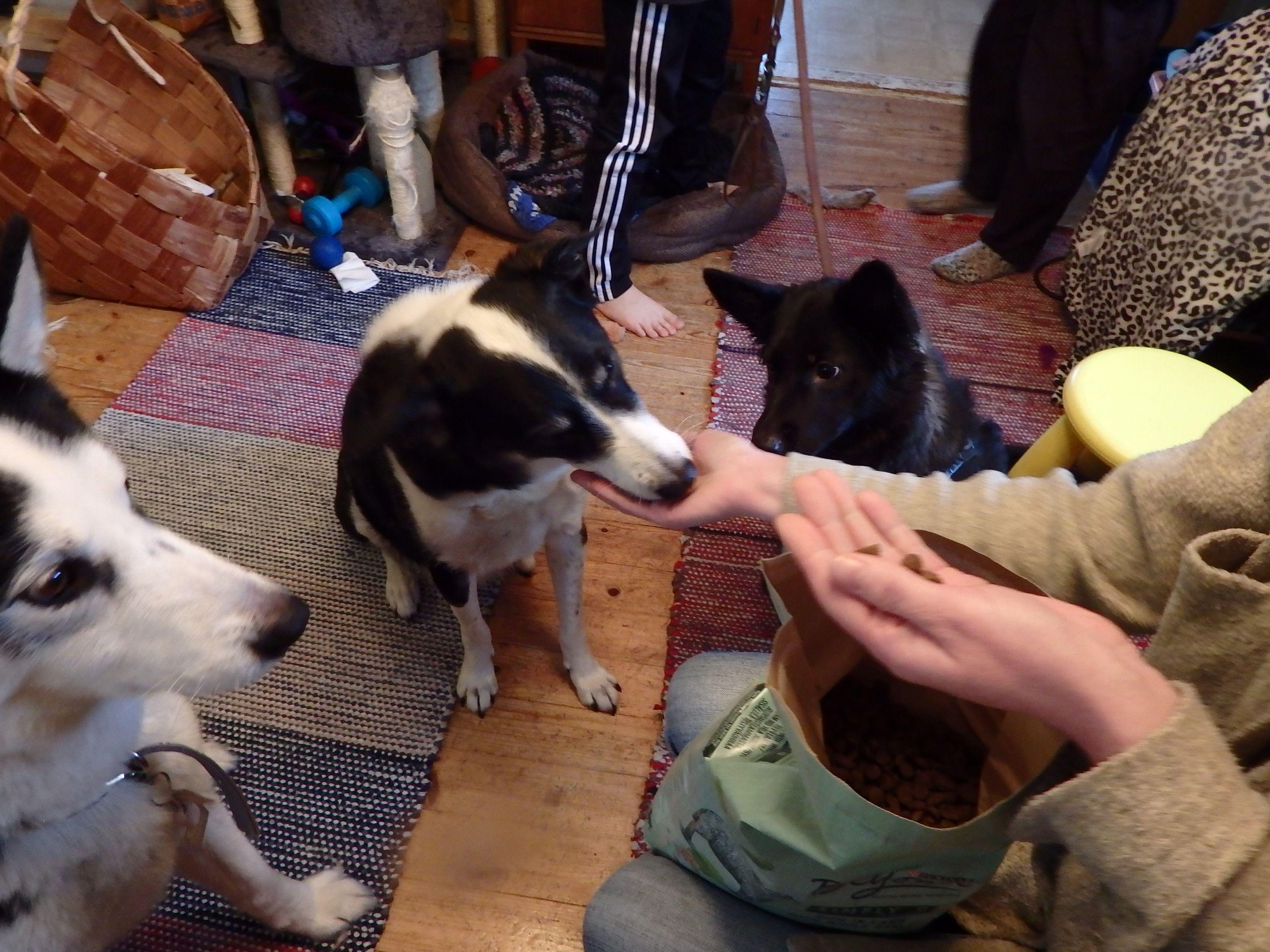 #purina #beyondsimply9 #hopottajat  https://www.hopottajat.fi/beyondsimply9/ Hopottajana testaamassa koirien kanssa uutuus ruokaa .