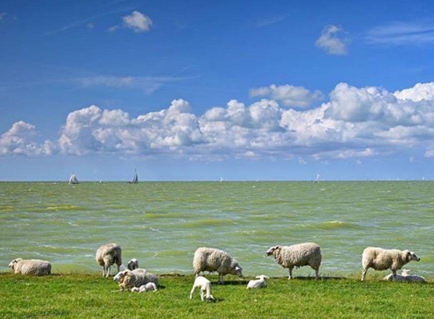 Lovely day  Fotograaf: @nynkepostma_photography #dutchskies2017 #dutchsky #nederlandseluchten #europeanskies365 #europeanskies