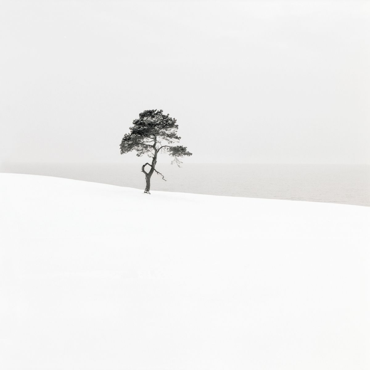 Snow Scene I - trends in fotografie website