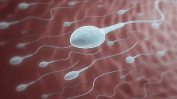 Single and lesbian women drive demand for donor sperm