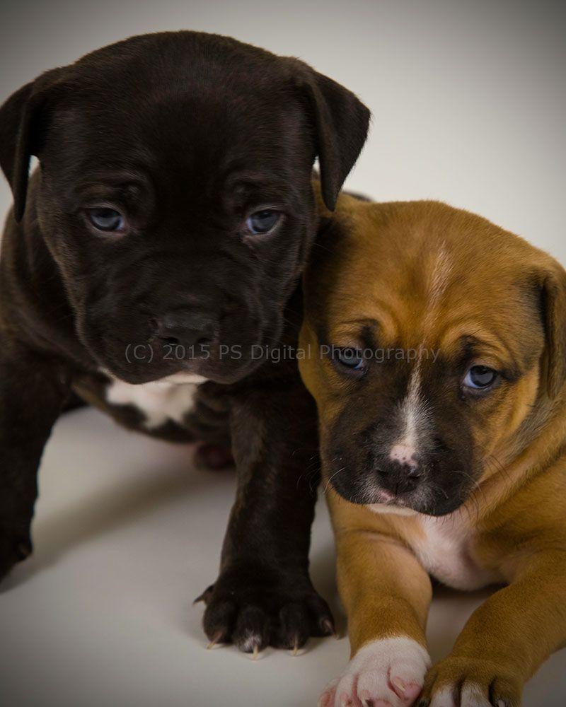 Buddy & Katniss #puppies #pets #photography