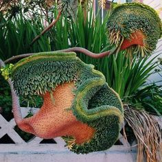 Fasciation Of Euphorbia Mutante Fasciation Is A Malformation Of Plant Stems Commonly Manifested As Enlargement And Flatte Unusual Plants Plants Weird Plants