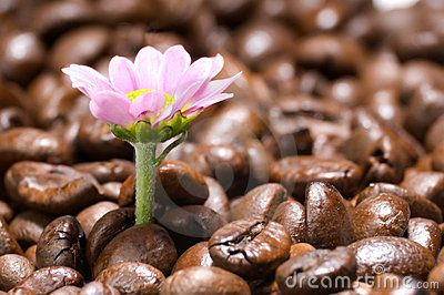 Coffee Gives Vitality Royalty Free Stock Image - Image: 4765886