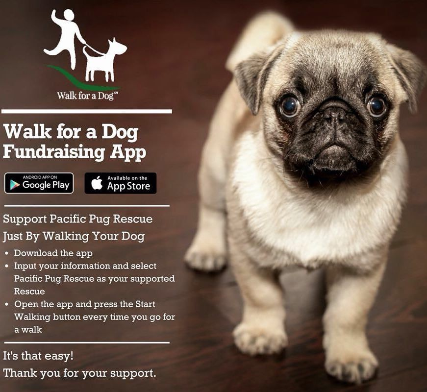 Pin By Lacyandpaws On Pacific Pug Rescue Dogs Pugs Pets