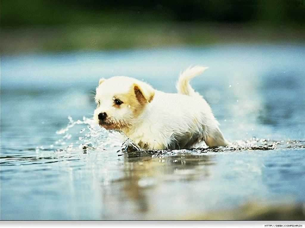Playing in the puddles woohoo! Cute dog wallpaper