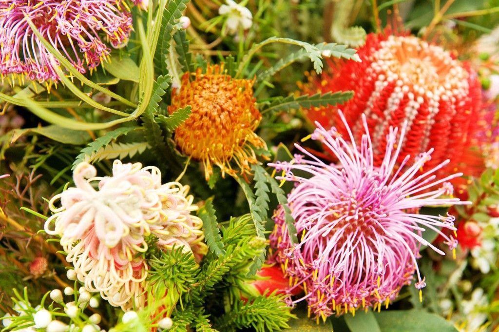 Australian Bush Flower Essences The Tao Of Dana Australian Flowers Australian Native Flowers Flower Essences