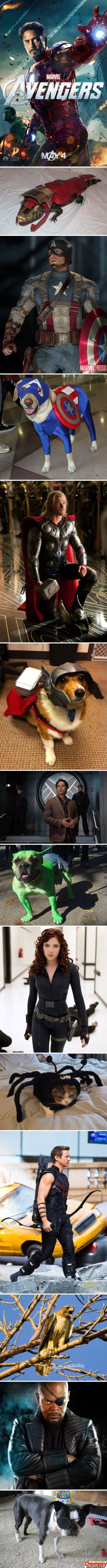 Avengers Cast as Animals