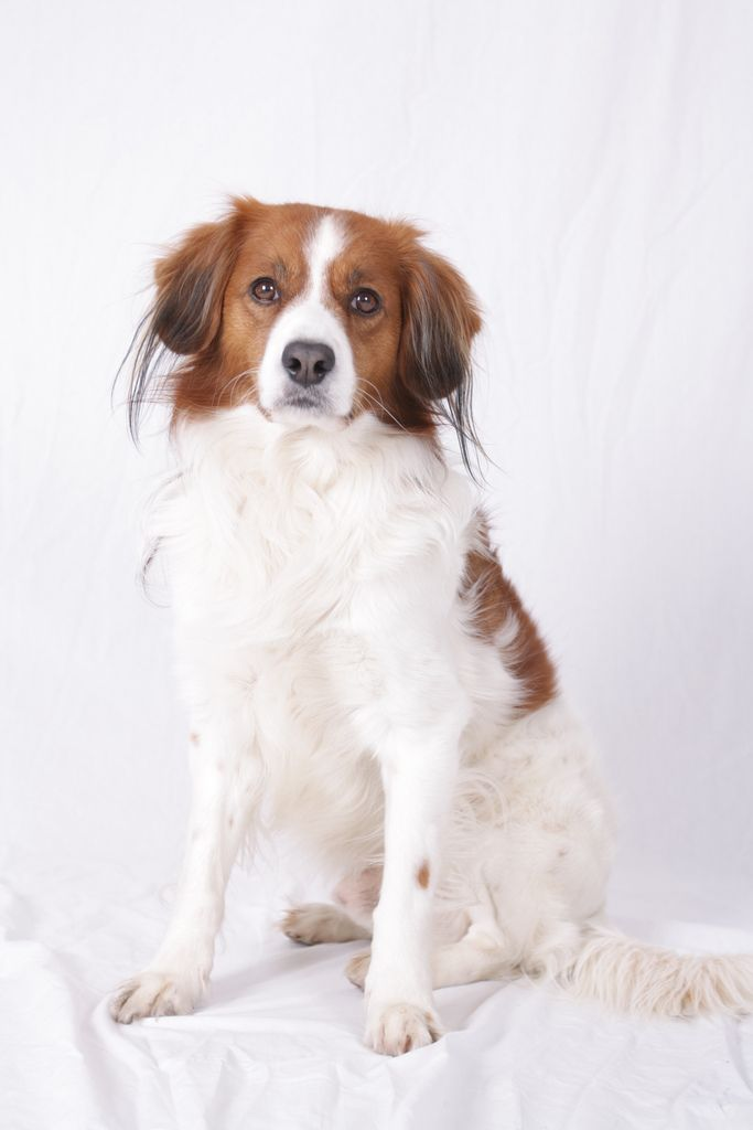 Dukky Dog Breeds Dog Angel Puppies