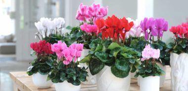 Blühende Zimmerpflanzen bringen mehr Farbe in Ihre Innenräume   Fresh Ideen für das Interieur, Dekoration und Landschaft Fantastic