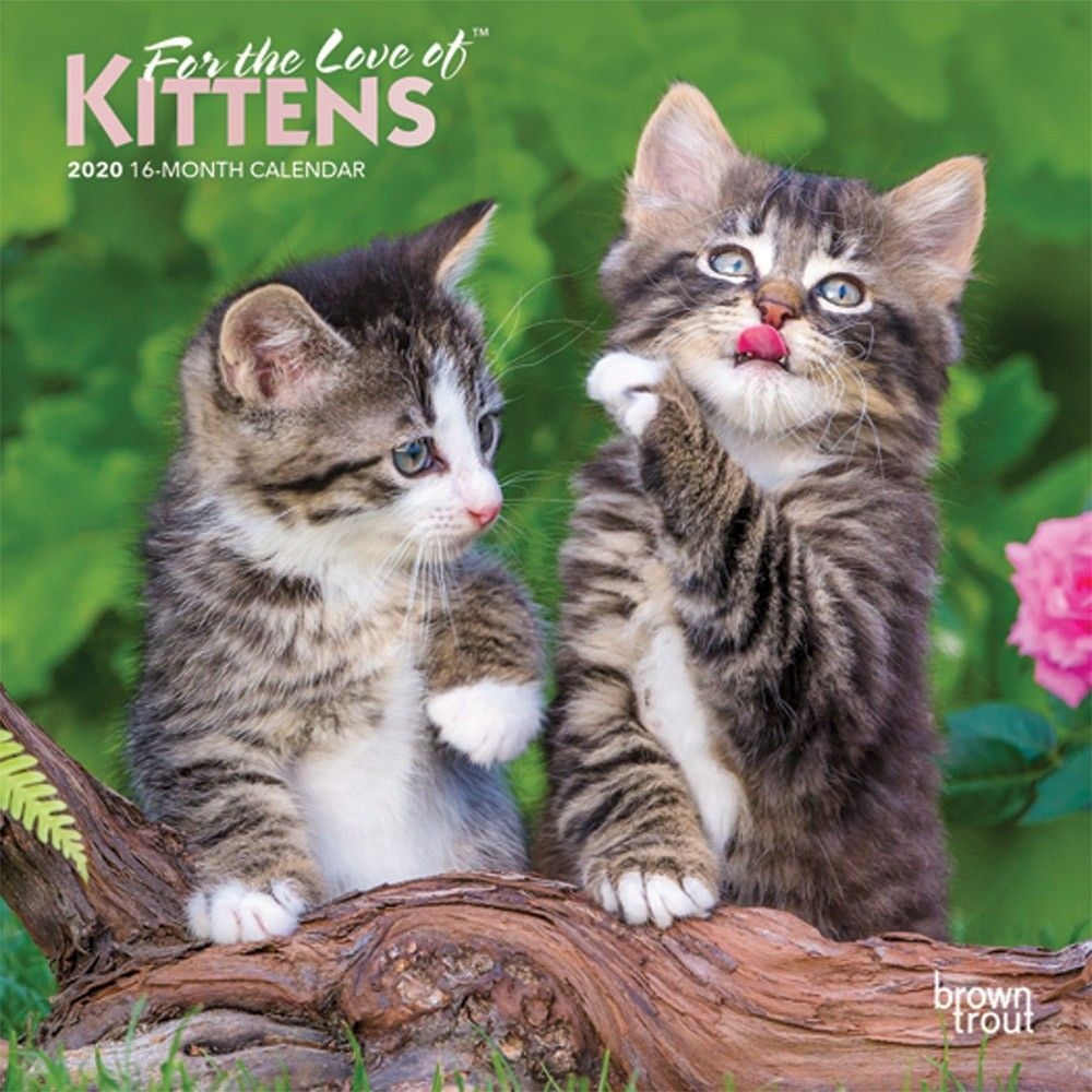 For The Love Of Kittens 2020 7 X 7 Inch Monthly Mini Wall Calendar With Foil Stamped Cover Animals Cats Kittens Feline Isbn Cats And Kittens Kittens Feline