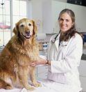 Low Cost Vet Affordable Spay Neuter Clinic Sterilize Cat Dog Pottstown Pa Dog Daycare Near Me Dog Boarding Near Me Dog Clinic