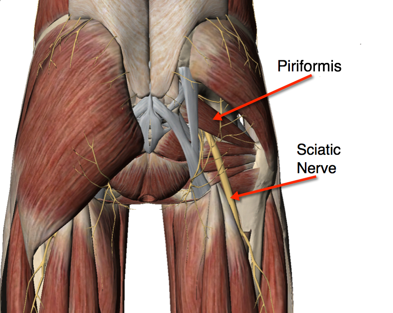 Do i have sciatic nerve pain piriformis syndrome sciatica and sciatica nerve pain refers to tingling numbness or pain which is produced by the nerve root irritation the roots lead to sciatic nerves which are produced altavistaventures Choice Image