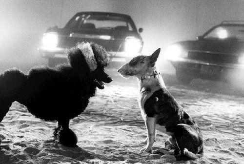 Tim Burton Tim Burton Tim Burton Movie Bull Terrier