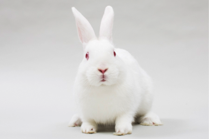 Rama A Well Loved New Zealand White Rabbit At Saveabunny Animals My Family Rabbit