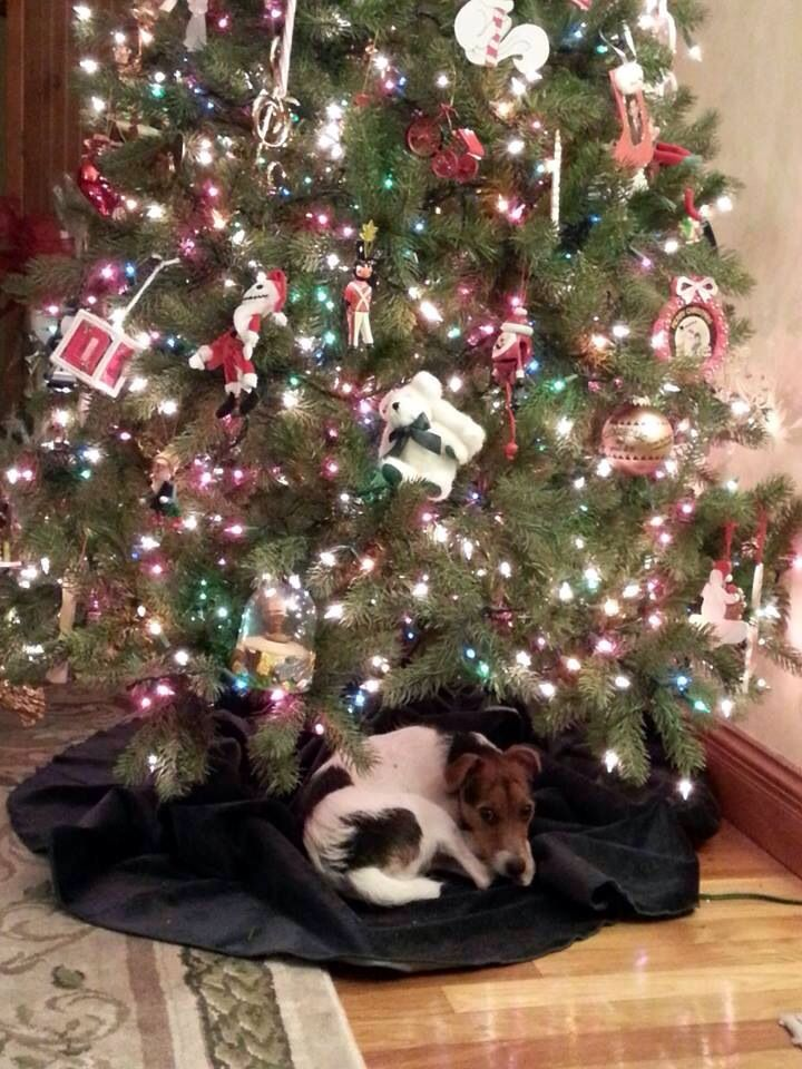 A jrt is not just for chrimbo for life for love forever