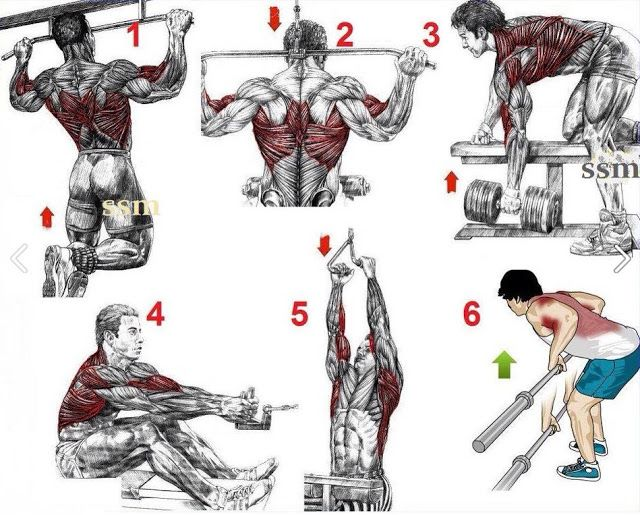 back workout