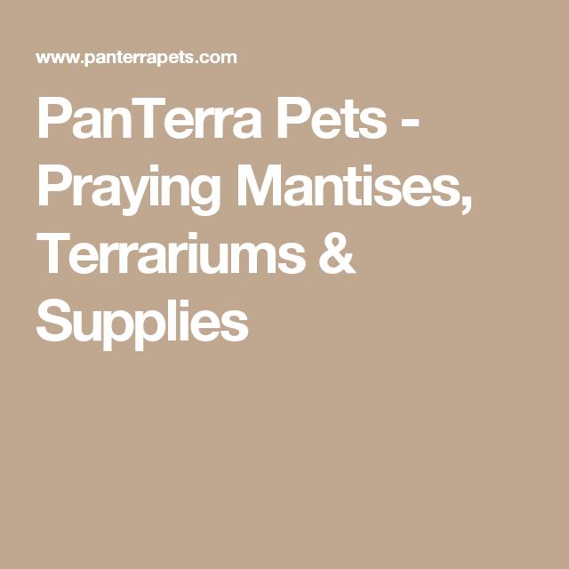Panterra Pets Praying Mantises Terrariums Supplies Terrarium Supplies Terrarium Pets