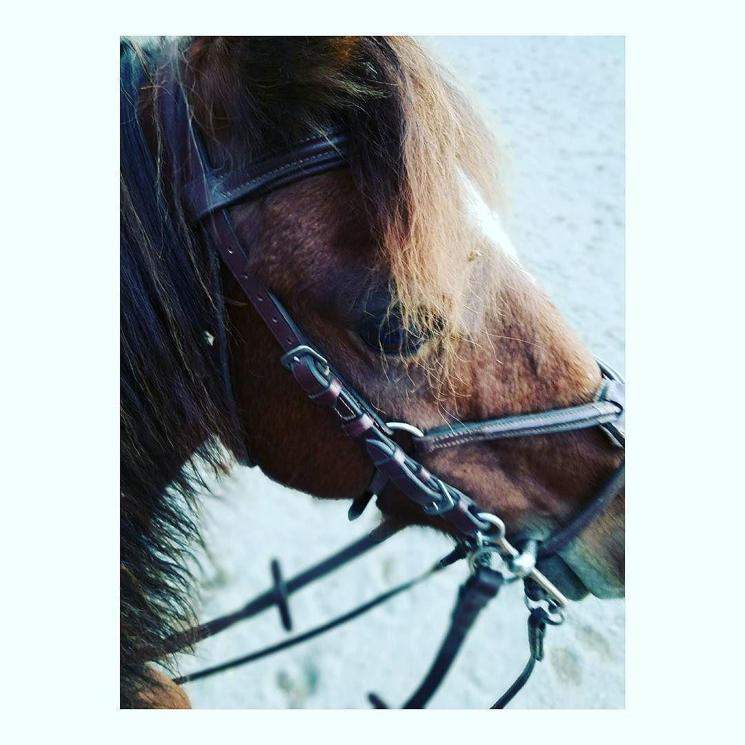 Ponymare! #horse #horses #horseoftheday #horsesofinstagram #instahorse #instagramhorses #instapet #petsofinstagram #petoftheday #instagrampets #equestrian #equestrianlife #horsebackriding #horseriding #hackney #hackneypony #horselove #mylittlepony #ponychild #demonpony #ilovemypony