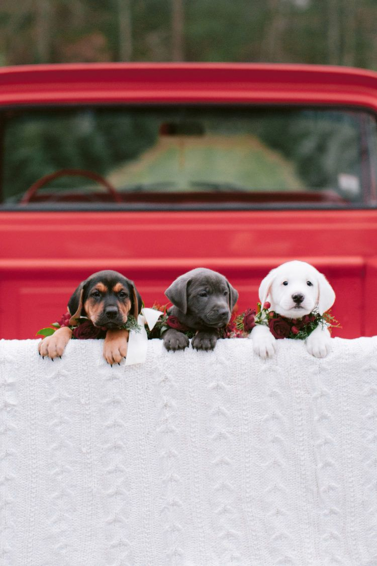 This Puppy Filled Holiday Shoot Will Be The Cutest Thing You Ll