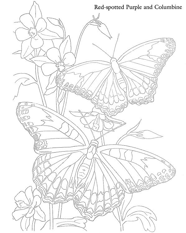 Butterflies and Flowers to Paint or Color Dover
