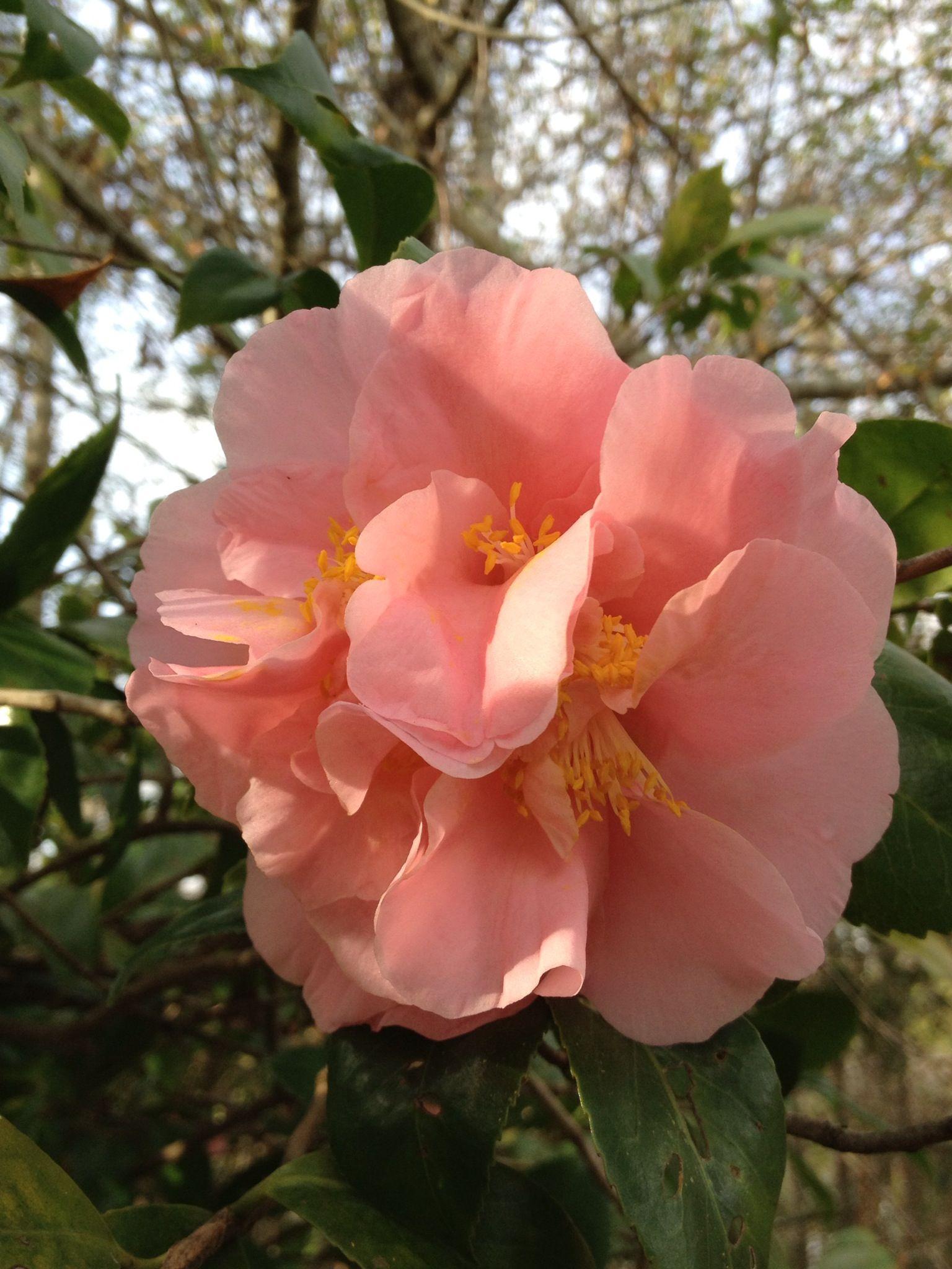 Love the soft peach color | Flowers Etc | Pinterest | Peach colors ...