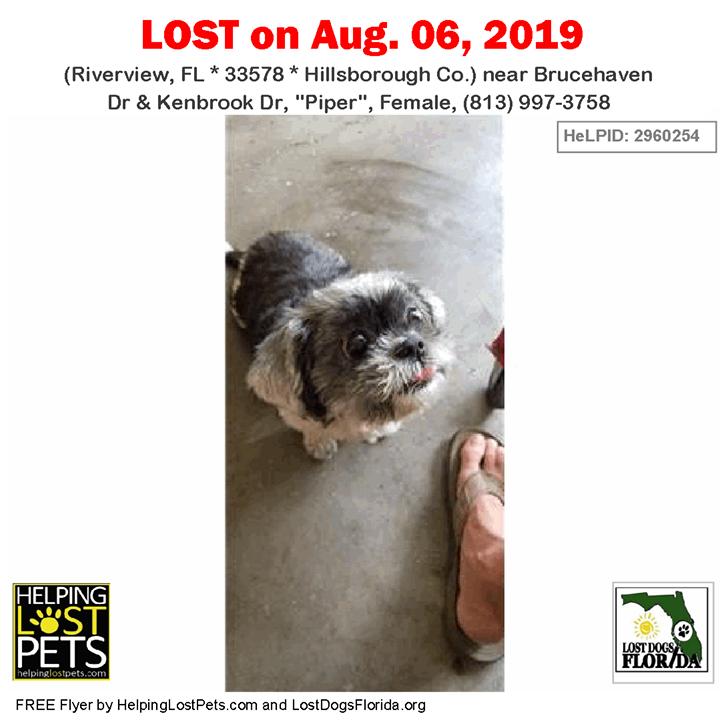 LOST DOG Have you seen Piper? LOSTDOG Piper Riverview