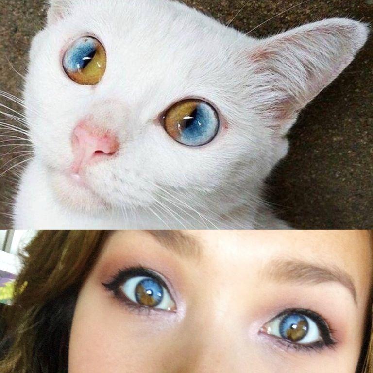 Sectoral Heterochromia ridum | DeMorte | Pretty eyes ...