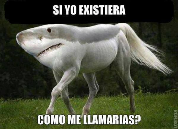 Pin By E Renfro On Spanish Subjunctive Photoshopped Animals Weird Animals Horses