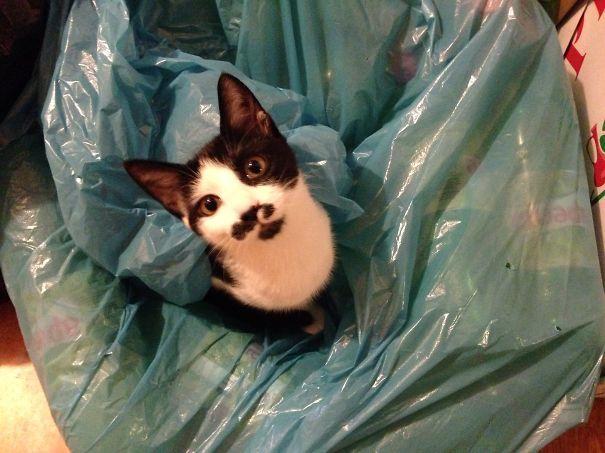 Recyclable Kitten
