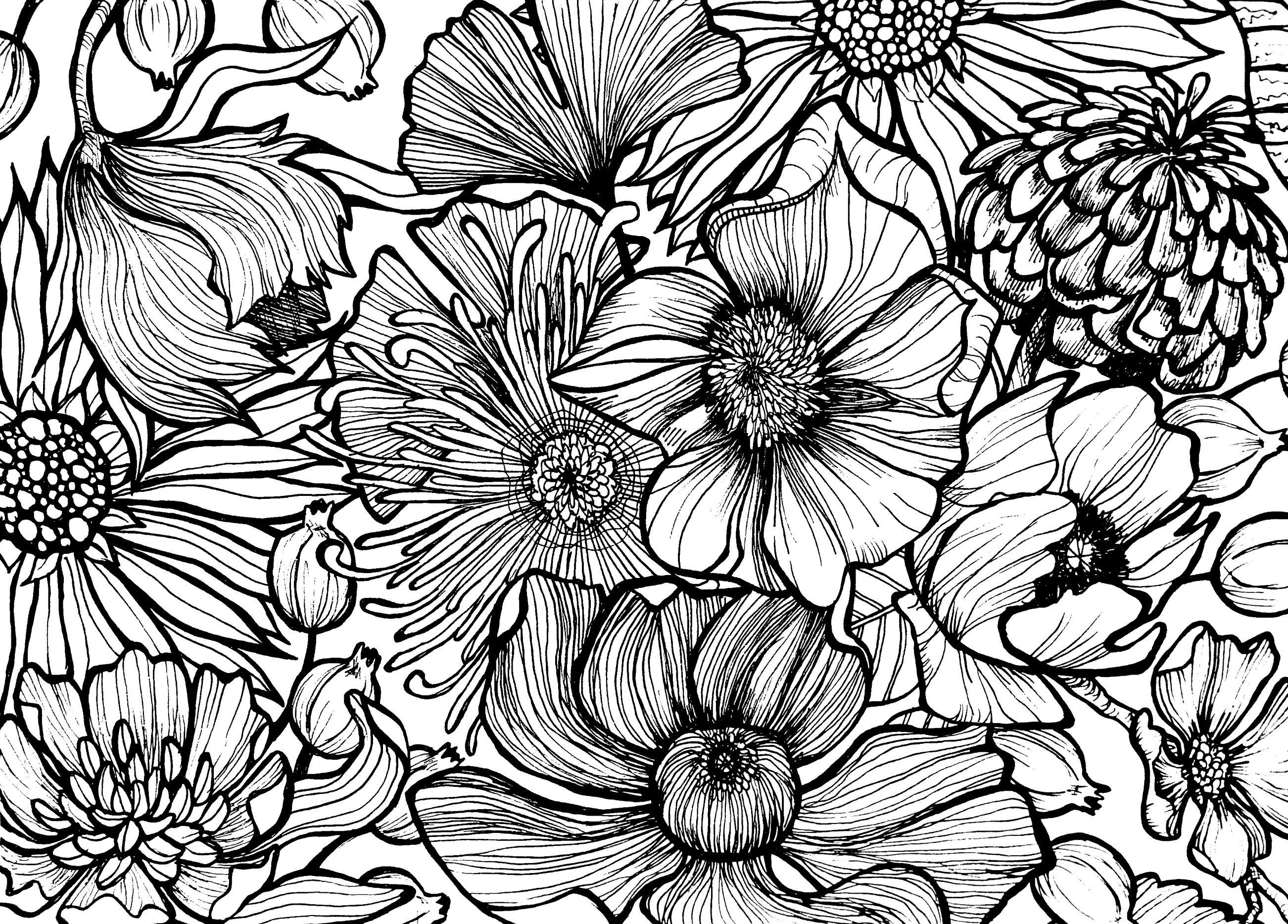 Black And White Line Drawing Flower : Best fine line drawings images